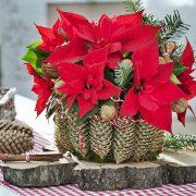 15 идеи со кои божиќната ѕвезда ќе стане уште поубав украс во домот