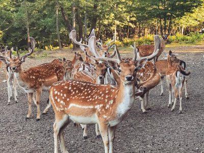Долина на елените: Бајковита дестинација во близина на Плитвичките езера