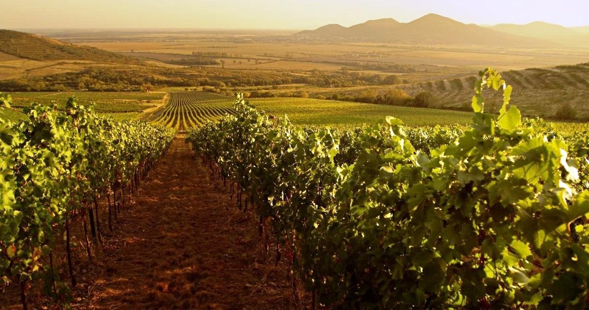 Каде се произведува најскапото вино во светот?