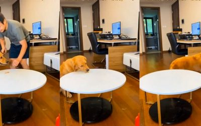 Вирално видео: Погледнете како ова куче го надмудри сопственикот со својот трик