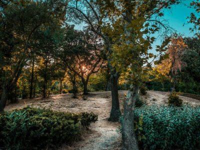 """Зелена оаза во Мадрид која 400 години била забранета за """"обичните"""" луѓе"""