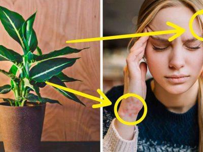 10 домашни растенија што може да доведат до труење на организмот