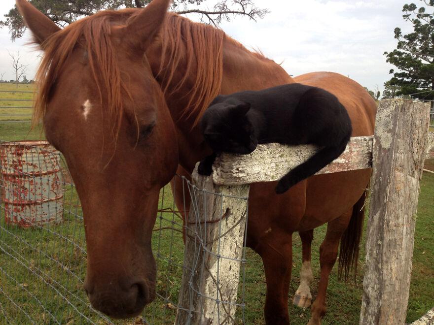 Пријателство без граници: Овие коњ и мачка се пријатели повеќе од 7 години