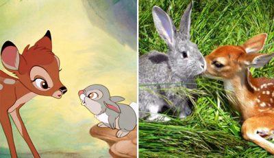 13 фотографии од вистински животни што личат на ликовите на Дизни