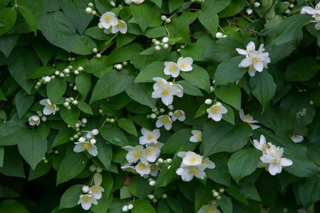 Растенија кои го намалуваат стресот и вознемиреноста