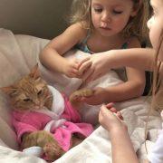 Слатко видео од мачка која ужива во својот спа-ден