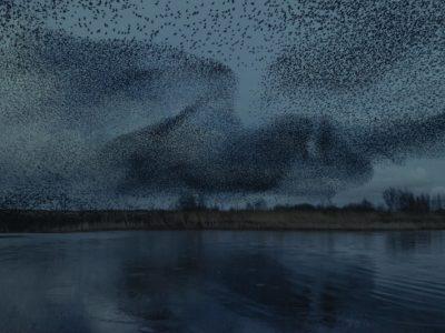 Магични фотографии од јато птици на небото во Данска