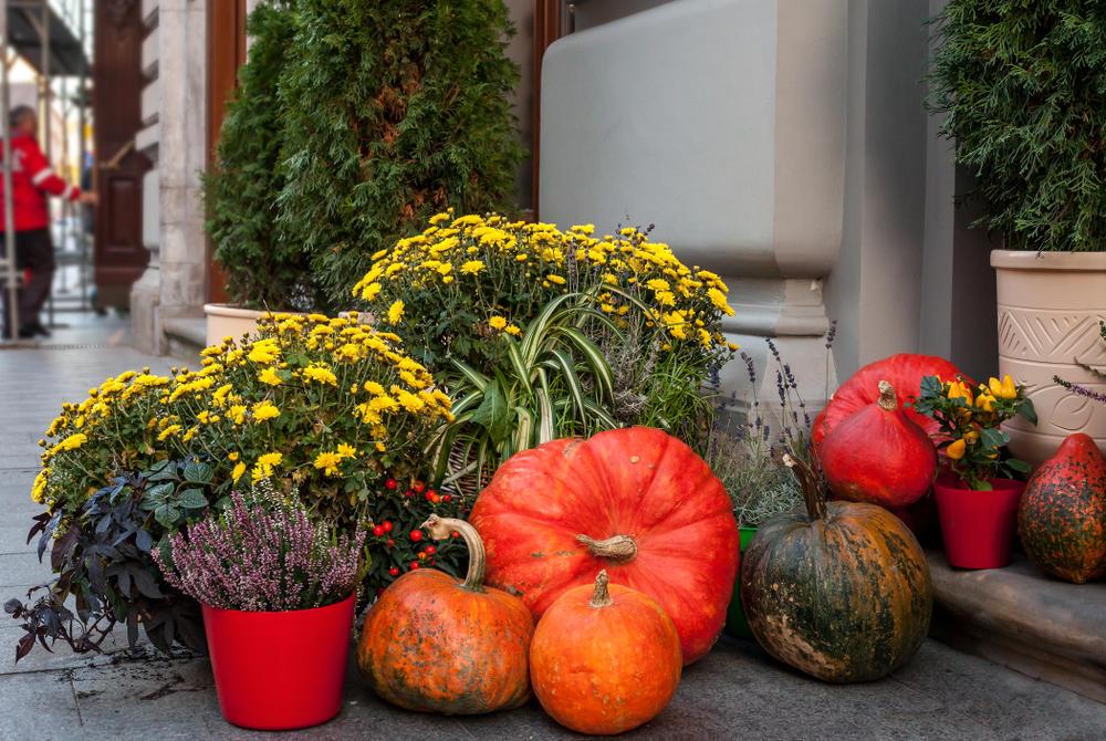 Најубава декорација на екстериерот: Како да ги искористите лисјата, цвеќињата и есенските плодови?