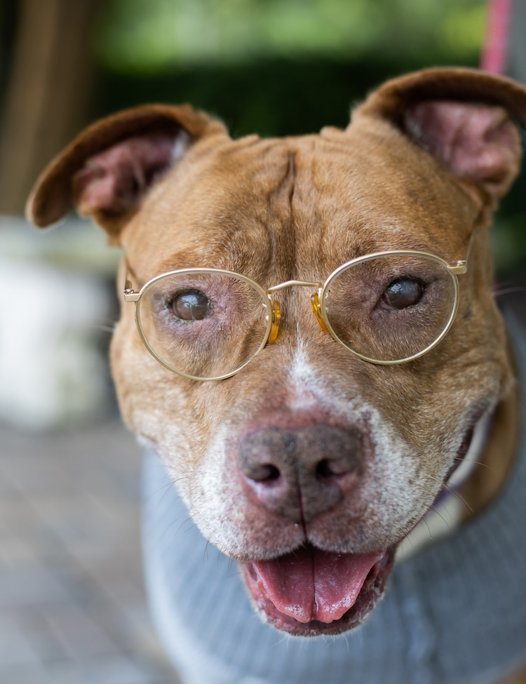 Засолниште за животни ги облекува постарите животни како постари граѓани за симпатична фотосесија