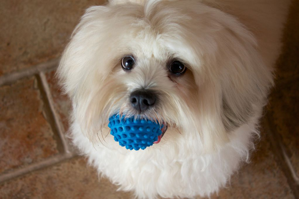 10 раси кучиња што изгледаат како меки топчиња дури и кога ќе пораснат