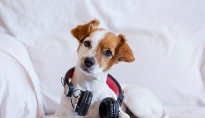 Објавена е божиќна песна за кучиња што предизвикува интересни реакции