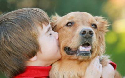 Осаменост и пандемија: Како домашните миленици ни ја пружаат социјалната интеракција која ни недостига?