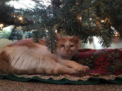 Зошто мачките ги сакаат новогодишните елки?