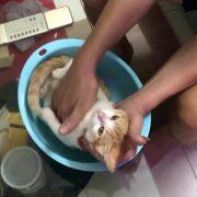 Иден дедо ја користи својата мачка за да го научи својот син како се капе бебе