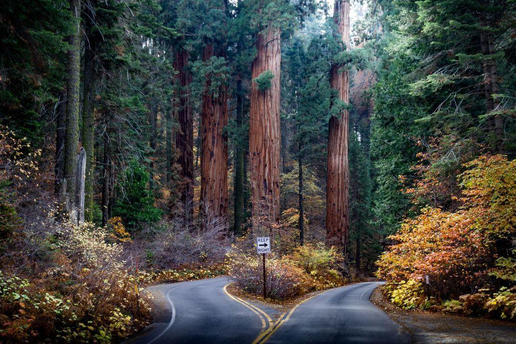 Прекрасен парк во кој се наоѓа најголемото дрво во светот