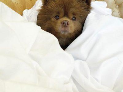 Куче што изгледа како меченце било напуштено, но наскоро го нашло својот прекрасен дом