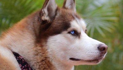 Не можете да им одолеете: Ова се најубавите кучиња на светот