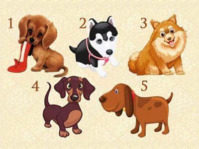 Тест: Замислете една желба, изберете куче и дознајте дали ќе ви се оствари желбата