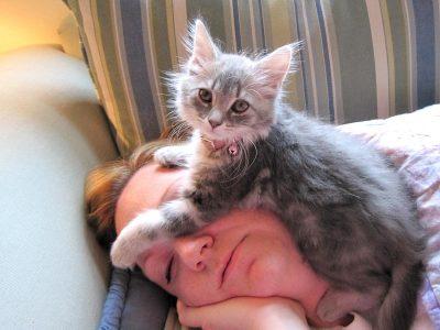 Зошто мачките сакаат да спијат на главата на својот сопственик?