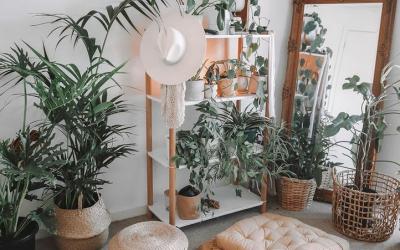 5-те најпопуларни растенија на Инстаграм овие денови