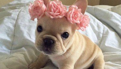Мими Роуз: Кучето кое стана ѕвезда на Инстаграм