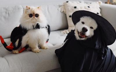 Ромео и Каспер: Весело куче и мрзлива мачка кои се најдобри пријатели