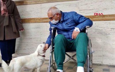 Верно куче го чекаше својот сопственик шест дена пред болница во Турција