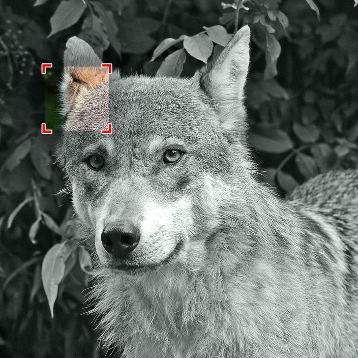 Тест: Пронајдете ги скриените предмети во овие 20 слики