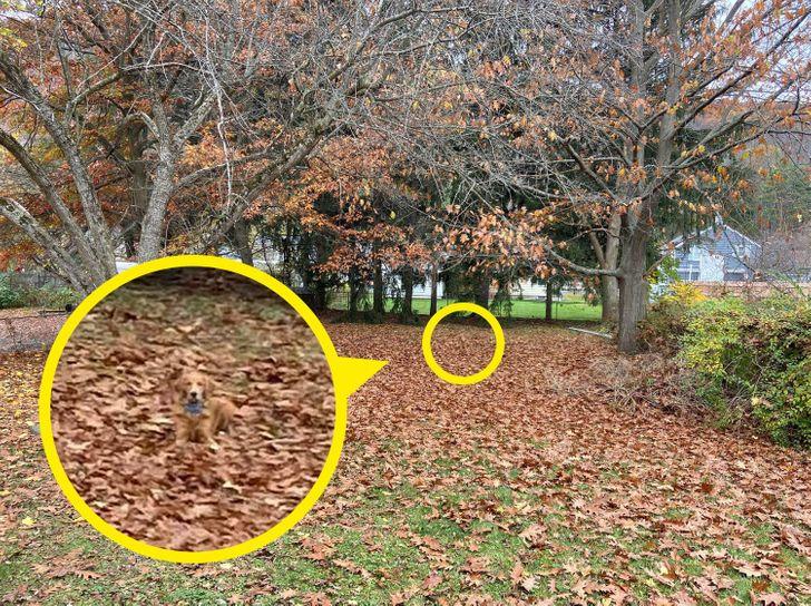 Тест: Пронајдете ги скриените животни и предмети за да проверите дали имате око соколово