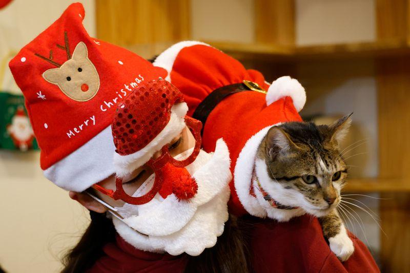 Што може да биде послатко од мачки облечени во костими за Дедо Мраз?