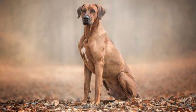 7 раси кучиња чија убавина секогаш предизвикува воодушевување