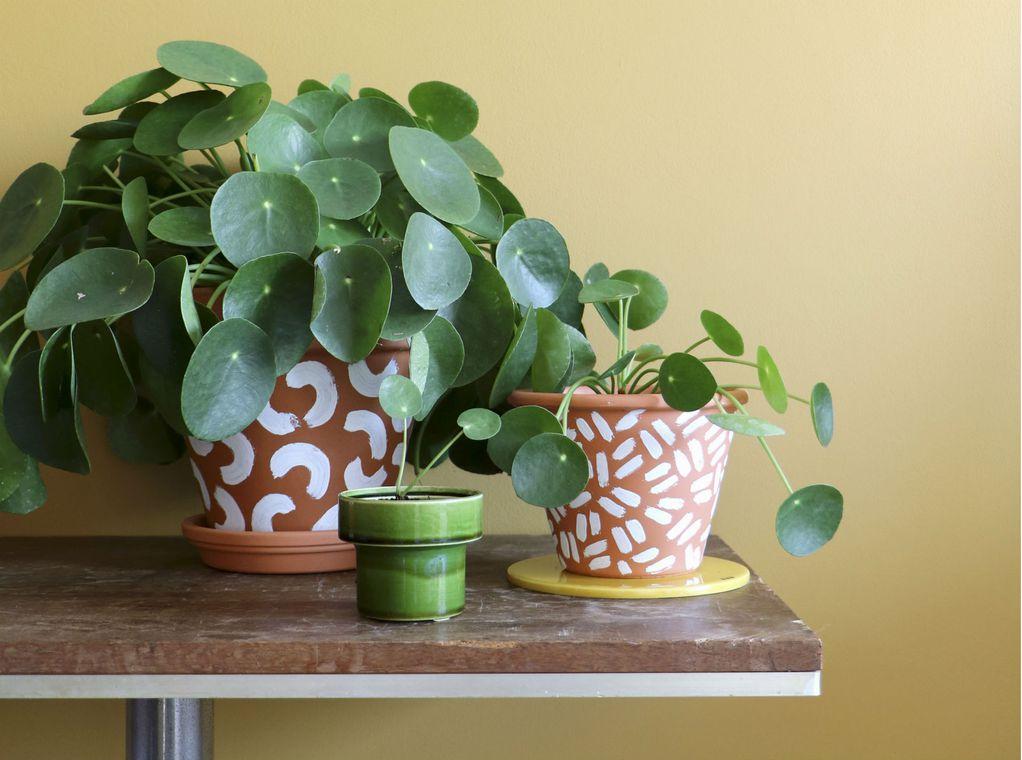 7 растенија што имаат скриено значење