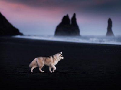Кучиња фотографирани во зачудувачки пејзажи