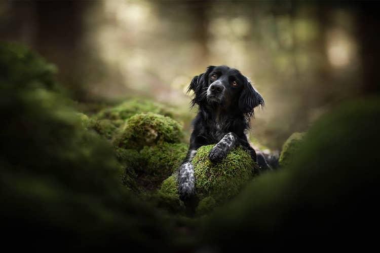 Кучиња фотографирани во зачудувачки пејсажи