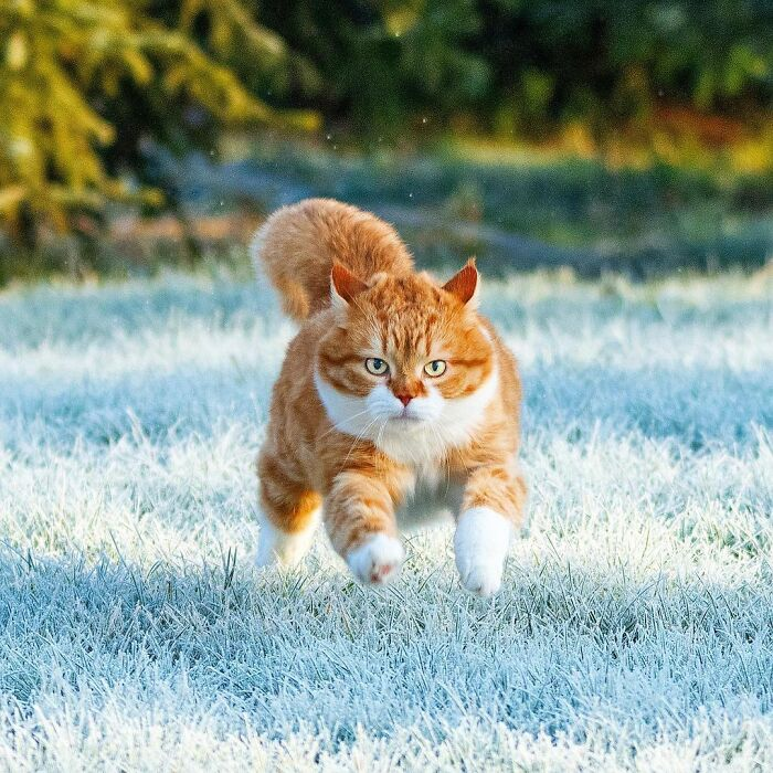 Запознајте го Џинџер: Слаткиот мачор кој ужива во снегот!