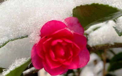 Балкон полн со разнобојни цвеќиња и во текот на зимата: Растенија што можат да преживеат на мраз и на ниски температури