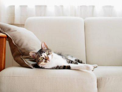 Домашно милениче и чиста куќа: Не е лесно, но е можно со овие неколку трикови