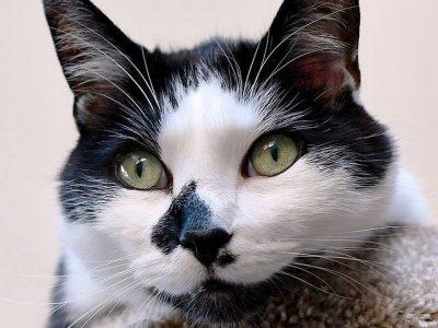 Што прават мачките кога не сте дома?