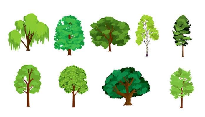 Тест: Изберете едно дрво и дознајте што ве чека оваа година