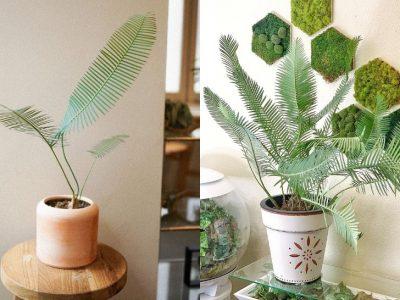 Диоон едуле: Растение кое се вклопува во секој ентериер