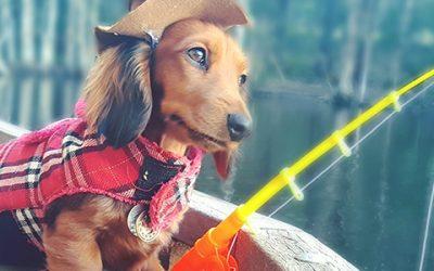 Ова слатко кученце е новата ѕвезда на Инстаграм
