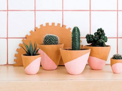 Слатки минијатурни кактуси што веднаш ќе посакате да ги имате во вашиот дом