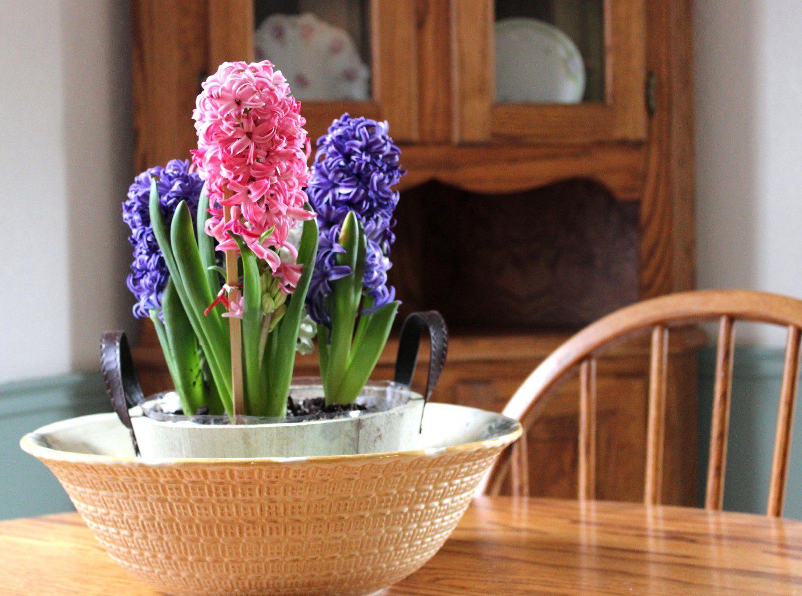 Мирисливи зумбули: Трикови со кои предвесникот на пролетта нема да овене