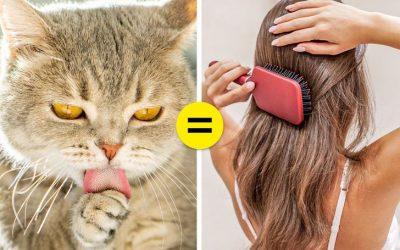 Зошто мачките имаат толку груб јазик?