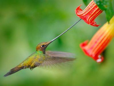 16 животни на кои природата ја потрошила целата своја креативност