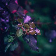 Фотографии кои ја истакнуваат мистичната убавина на растенијата
