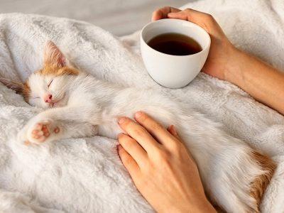 """Што ќе направи мачката ако """"намириса"""" дека сте болни или имате температура?"""