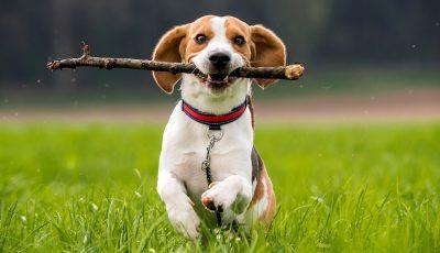 Тајната е во двата слога: Како да изберете совршено име за вашето домашно милениче?