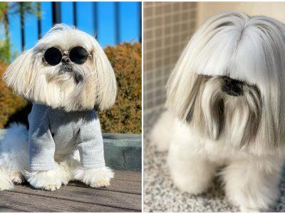 Ова куче има највпечатливи фризури на Инстаграм