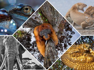"""Победниците од натпреварот """"Најдобра фотографија од природата"""" за 2020 година"""